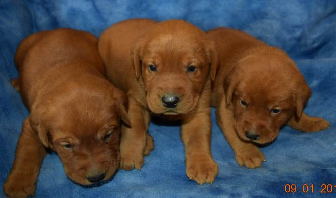 Yes, one of these fur balls is coming home with us at the end of Sept!