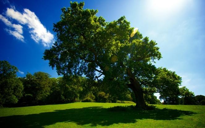 tree-sun-shade-1280x800.jpg
