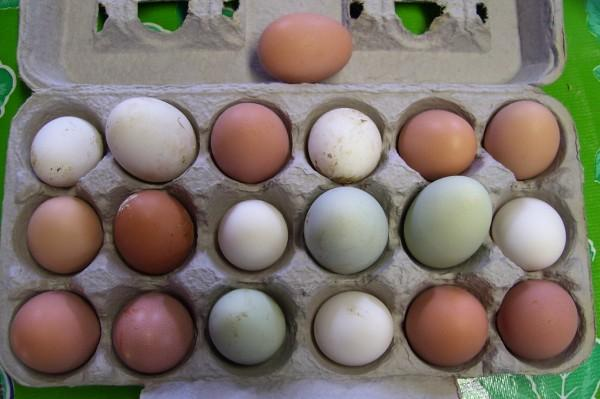 19-eggs